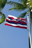 bandeira do estado do havaí no mastro com palmeiras