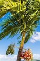 bagas sob folhas de palmeira