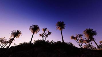 ilha na praia do pôr do sol