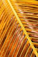 closeup velha folha de coco seco foto