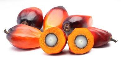 vários frutos de palmeira laranja e vermelha sobre um fundo branco
