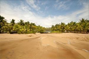 praia virgem com palmeira