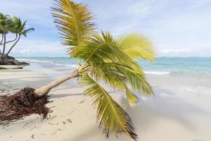palmeiras na praia.