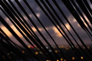 silhueta de ramo de palmeira ao pôr do sol - linhas diagonais