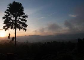 nascer do sol com a silhueta de uma árvore plam