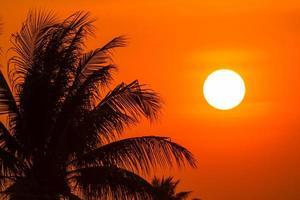 coqueiro na luz do sol