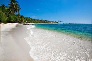 palmeiras em uma praia tropical
