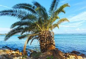 palmeira na praia de verão (grécia)