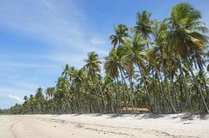 palmeiras de praia tropical brasileira remota