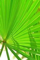 folhagem de palmeira iluminada por trás com sombras pontiagudas foto