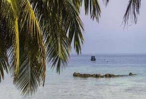 folhas de palmeira na ilha de tioman, malásia