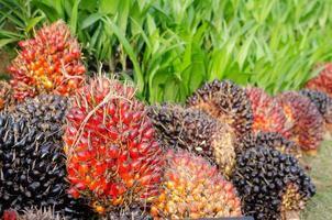 pilha de óleo de palma