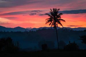 silhueta de coqueiro durante o pôr do sol
