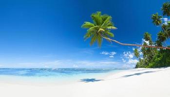 praia tropical com areia branca e palmeiras