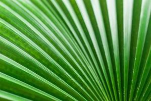 imagem abstrata de folha de palmeira verde para segundo plano. foto