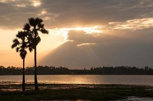 coqueiros silhueta lindo pôr do sol nascer do sol ásia