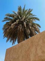 palmeira e uma parede - natureza-morta árabe