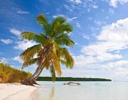 paraíso tropical de verão com palmeiras em florida keys, eua