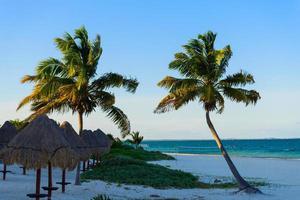 palmeiras e guarda-sóis em praia tropical