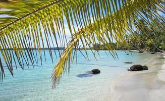 folha de palmeira e praia foto