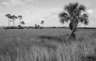 os Everglades foto