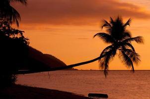silhueta laranja do pôr do sol de uma palmeira horizontal pairando sobre