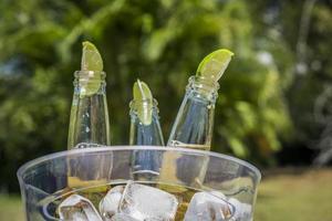 garrafas de cerveja com fatias de limão em balde de gelo