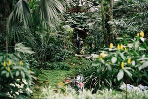 caminho estreito no jardim botânico