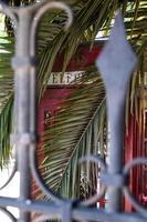 cabine telefônica vermelha atrás de cerca e palmas foto