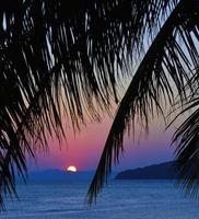 pôr do sol com folhas de palmeira.