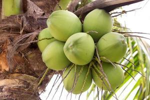 monte de cocos