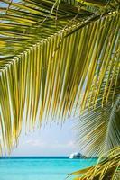 praia de areia branca tropical com coqueiros.