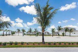 imagem de palmeiras em um resort de férias.