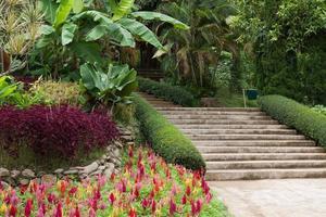 escadas no jardim