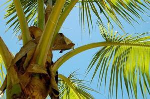 closeup de palmeira
