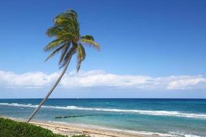 verdadeiramente palm beach