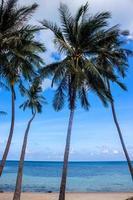 palmeiras na praia haad khom