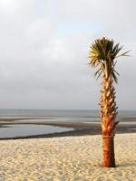 palmeira solitária na praia foto