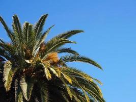 casa de palmeira