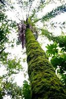 musgo de palmeira