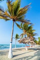 praia e palmeiras
