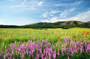 prado primavera