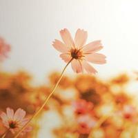 flores florescendo com pôr do sol um instagram retro vintage foto