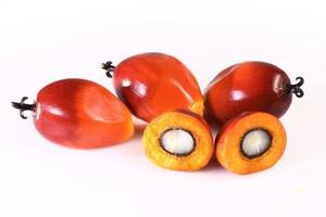 fruto de dendê foto