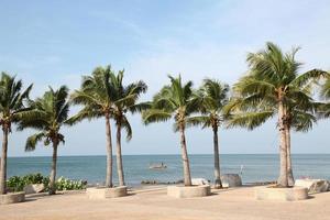 coco tropical foto