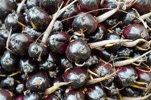 fruto de óleo de palma foto