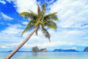 coqueiro e praia foto