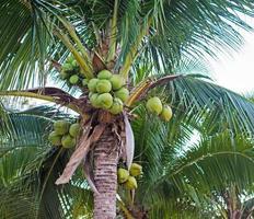 doce coqueiro foto