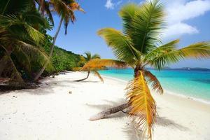 bela praia tropical no caribe