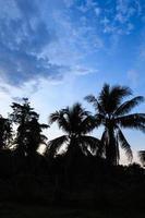 nuvens e silhuetas de árvores após o pôr do sol foto